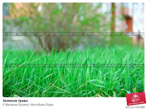 Купить «Зеленая трава», фото № 47090, снято 20 мая 2007 г. (c) Валерия Потапова / Фотобанк Лори