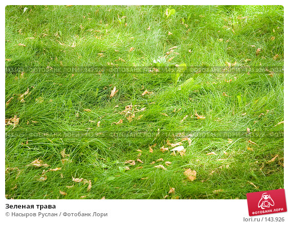 Зеленая трава, фото № 143926, снято 18 августа 2007 г. (c) Насыров Руслан / Фотобанк Лори