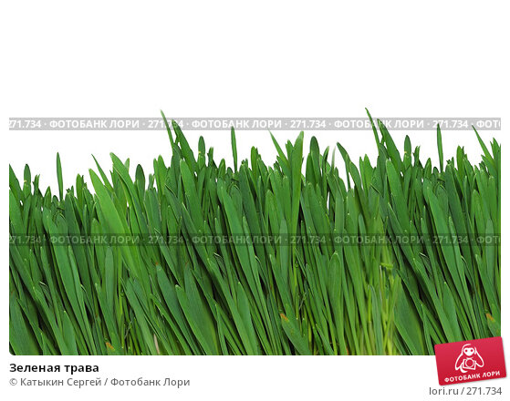Зеленая трава, фото № 271734, снято 15 марта 2008 г. (c) Катыкин Сергей / Фотобанк Лори