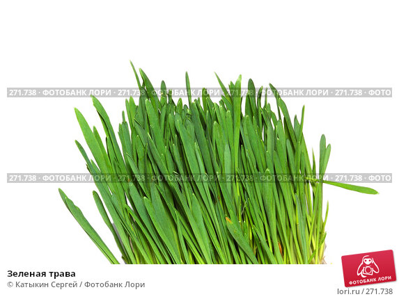 Зеленая трава, фото № 271738, снято 15 марта 2008 г. (c) Катыкин Сергей / Фотобанк Лори