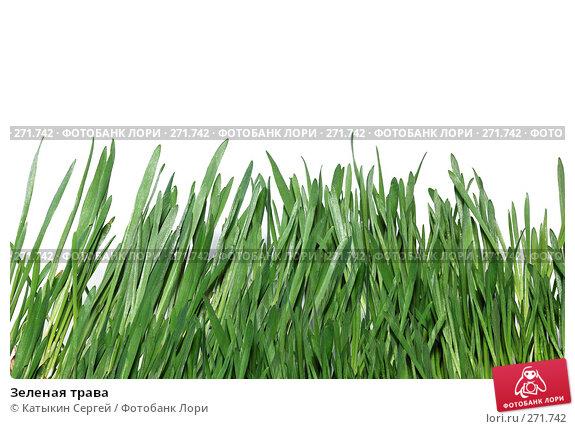 Зеленая трава, фото № 271742, снято 15 марта 2008 г. (c) Катыкин Сергей / Фотобанк Лори