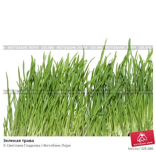 Зеленая трава, фото № 325086, снято 20 апреля 2008 г. (c) Cветлана Гладкова / Фотобанк Лори