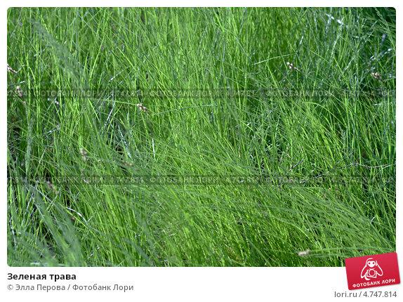 Зеленая трава. Стоковое фото, фотограф Элла Перова / Фотобанк Лори