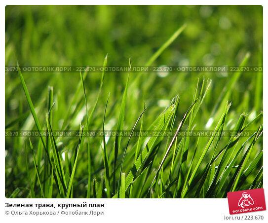 Зеленая трава, крупный план, фото № 223670, снято 23 июля 2007 г. (c) Ольга Хорькова / Фотобанк Лори