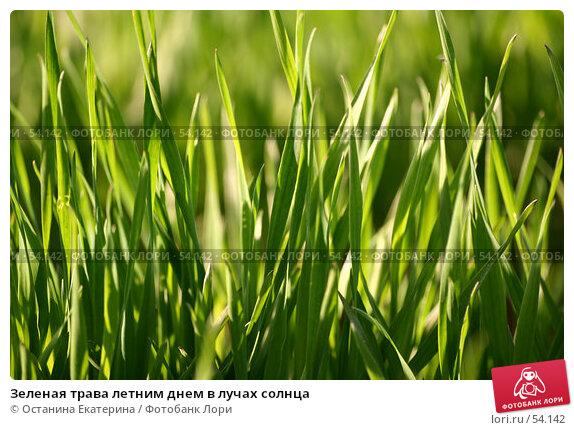 Зеленая трава летним днем в лучах солнца, фото № 54142, снято 15 мая 2007 г. (c) Останина Екатерина / Фотобанк Лори