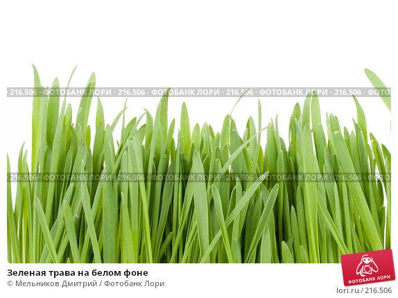 Зеленая трава на белом фоне, фото № 216506, снято 5 марта 2008 г. (c) Мельников Дмитрий / Фотобанк Лори