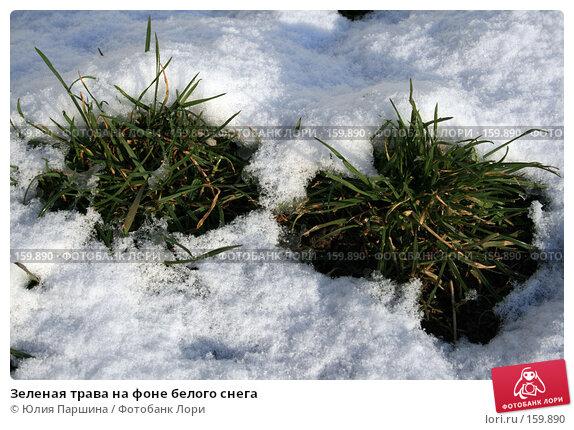 Зеленая трава на фоне белого снега, фото № 159890, снято 8 апреля 2007 г. (c) Юлия Паршина / Фотобанк Лори