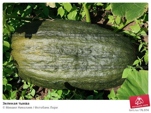 Зеленая тыква, фото № 76974, снято 27 августа 2007 г. (c) Михаил Николаев / Фотобанк Лори