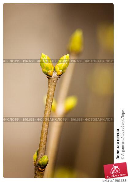 Зеленая весна, фото № 196638, снято 26 марта 2007 г. (c) Argument / Фотобанк Лори