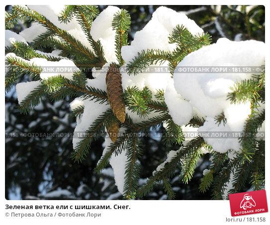 Зеленая ветка ели с шишками. Снег., фото № 181158, снято 15 декабря 2007 г. (c) Петрова Ольга / Фотобанк Лори