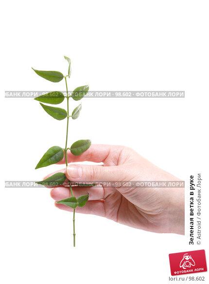 Купить «Зеленая ветка в руке», фото № 98602, снято 9 января 2007 г. (c) Astroid / Фотобанк Лори