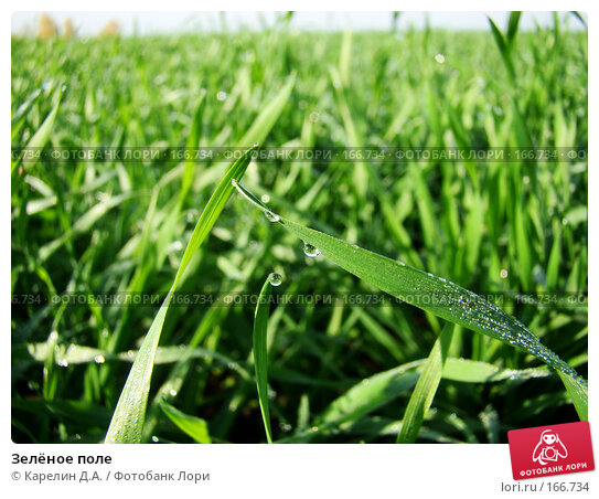 Зелёное поле, фото № 166734, снято 19 октября 2007 г. (c) Карелин Д.А. / Фотобанк Лори