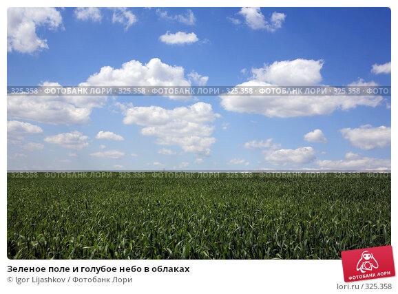 Зеленое поле и голубое небо в облаках, фото № 325358, снято 14 июня 2008 г. (c) Igor Lijashkov / Фотобанк Лори