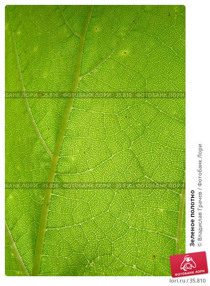 Зеленое полотно, фото № 35810, снято 27 июля 2004 г. (c) Владислав Грачев / Фотобанк Лори