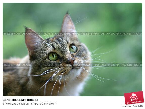 Зеленоглазая кошка, фото № 162618, снято 12 августа 2006 г. (c) Морозова Татьяна / Фотобанк Лори