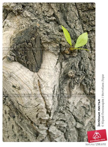 Купить «Зелёные листья», фото № 298610, снято 21 мая 2008 г. (c) Юрий Пономарёв / Фотобанк Лори