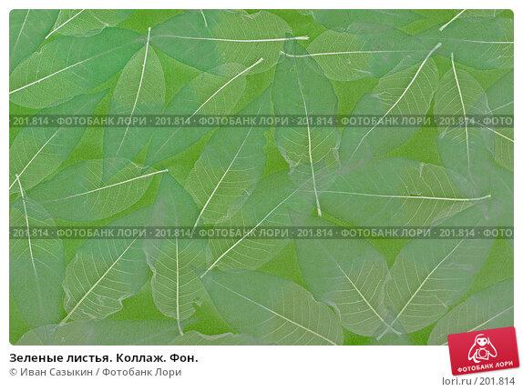 Зеленые листья. Коллаж. Фон., фото № 201814, снято 14 февраля 2008 г. (c) Иван Сазыкин / Фотобанк Лори