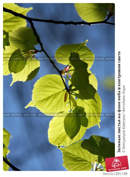 Зеленые листья на фоне неба в контровом свете, фото № 251138, снято 4 апреля 2008 г. (c) Demyanyuk Kateryna / Фотобанк Лори