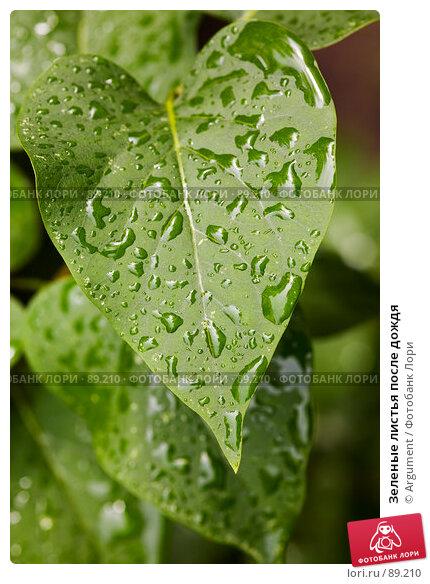 Зеленые листья после дождя, фото № 89210, снято 29 июня 2007 г. (c) Argument / Фотобанк Лори