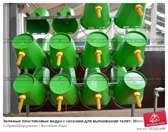 Купить «Зеленые пластиковые ведра с сосками для выпаивания телят. Молочная ферма», фото № 30925498, снято 28 мая 2019 г. (c) Ирина Борсученко / Фотобанк Лори