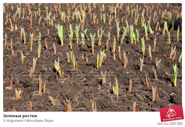 Зеленые ростки, фото № 255750, снято 15 апреля 2008 г. (c) Argument / Фотобанк Лори