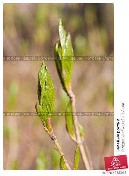 Зеленые ростки, фото № 258066, снято 20 апреля 2008 г. (c) Argument / Фотобанк Лори