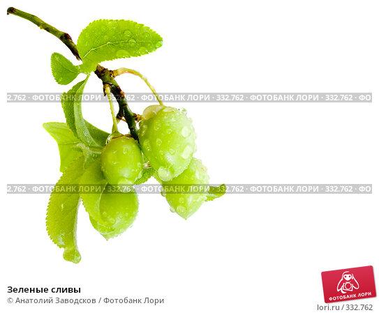Зеленые сливы, фото № 332762, снято 7 мая 2007 г. (c) Анатолий Заводсков / Фотобанк Лори