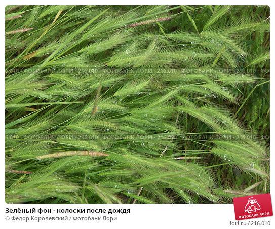 Купить «Зелёный фон - колоски после дождя», фото № 216010, снято 29 мая 2004 г. (c) Федор Королевский / Фотобанк Лори