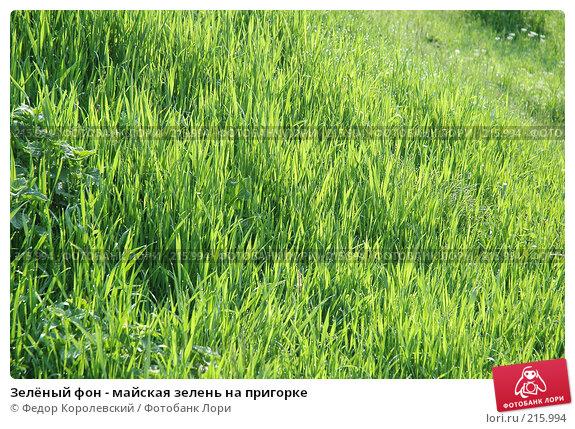 Зелёный фон - майская зелень на пригорке, фото № 215994, снято 7 мая 2005 г. (c) Федор Королевский / Фотобанк Лори