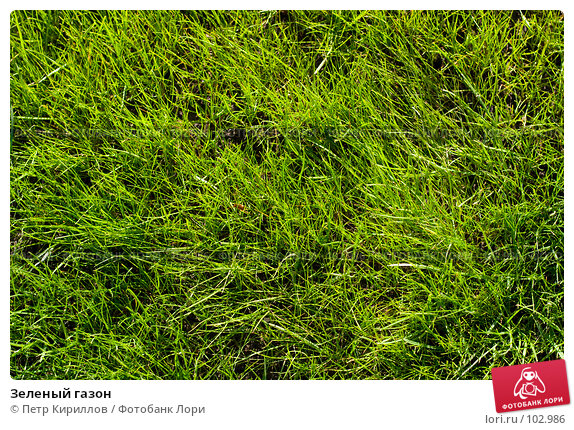 Купить «Зеленый газон», фото № 102986, снято 21 апреля 2018 г. (c) Петр Кириллов / Фотобанк Лори