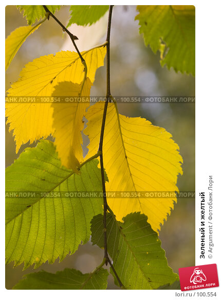 Зеленый и желтый, фото № 100554, снято 7 октября 2007 г. (c) Argument / Фотобанк Лори