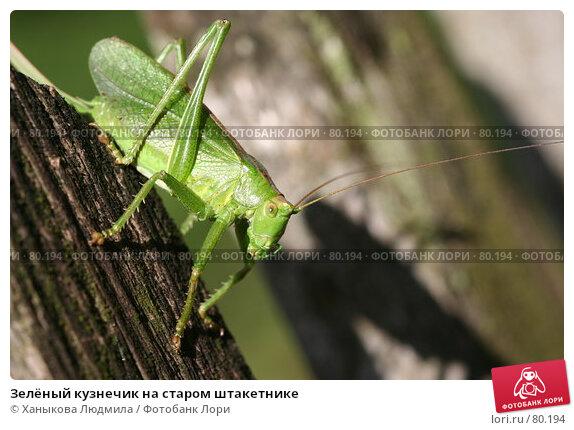 Зелёный кузнечик на старом штакетнике, фото № 80194, снято 4 сентября 2007 г. (c) Ханыкова Людмила / Фотобанк Лори