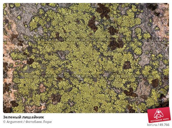 Зеленый лишайник, фото № 49766, снято 2 мая 2007 г. (c) Argument / Фотобанк Лори