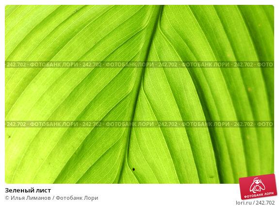 Зеленый лист, фото № 242702, снято 22 ноября 2005 г. (c) Илья Лиманов / Фотобанк Лори