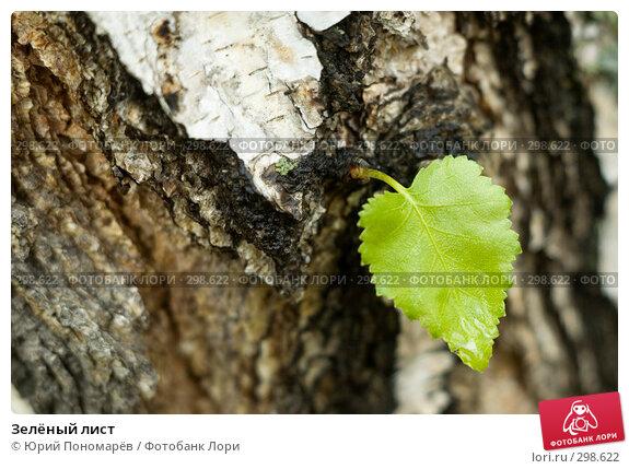Купить «Зелёный лист», фото № 298622, снято 24 мая 2008 г. (c) Юрий Пономарёв / Фотобанк Лори