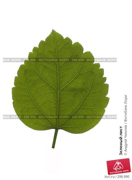 Купить «Зеленый лист», фото № 298990, снято 10 февраля 2008 г. (c) Андрей Чмелёв / Фотобанк Лори