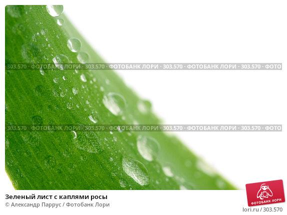 Зеленый лист с каплями росы, фото № 303570, снято 21 апреля 2008 г. (c) Александр Паррус / Фотобанк Лори
