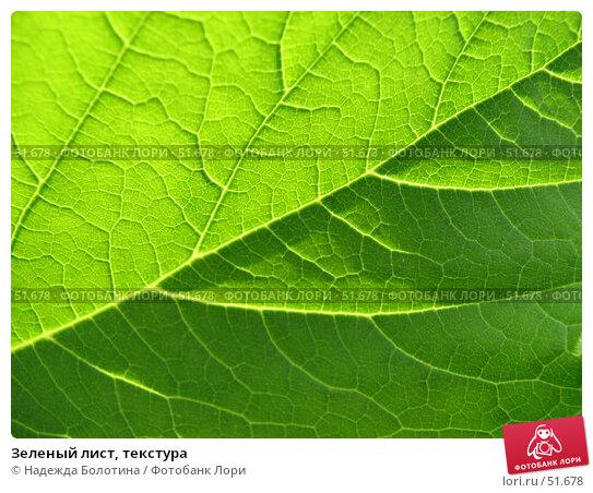 Купить «Зеленый лист, текстура», фото № 51678, снято 24 июня 2006 г. (c) Надежда Болотина / Фотобанк Лори