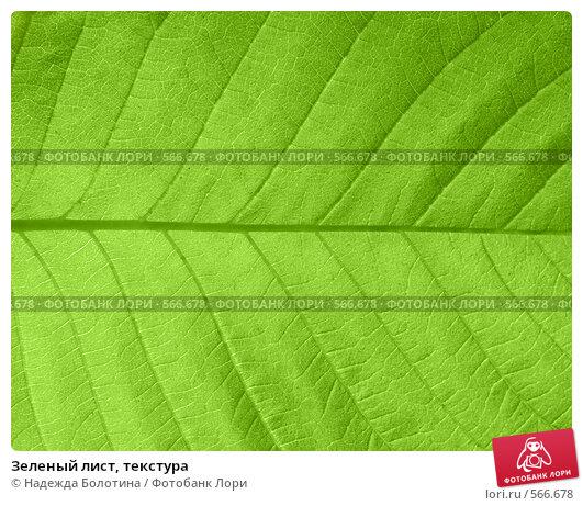 Купить «Зеленый лист, текстура», фото № 566678, снято 6 июня 2008 г. (c) Надежда Болотина / Фотобанк Лори