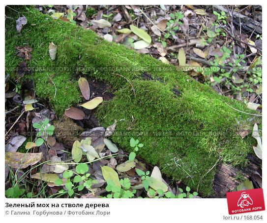 Зеленый мох на стволе дерева, фото № 168054, снято 18 октября 2006 г. (c) Галина  Горбунова / Фотобанк Лори