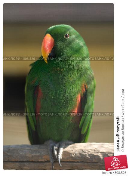 Зеленый попугай, фото № 308526, снято 17 мая 2008 г. (c) Владимир Воякин / Фотобанк Лори