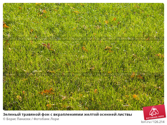 Купить «Зеленый травяной фон с вкраплениями желтой осенней листвы», фото № 126214, снято 21 ноября 2007 г. (c) Борис Панасюк / Фотобанк Лори