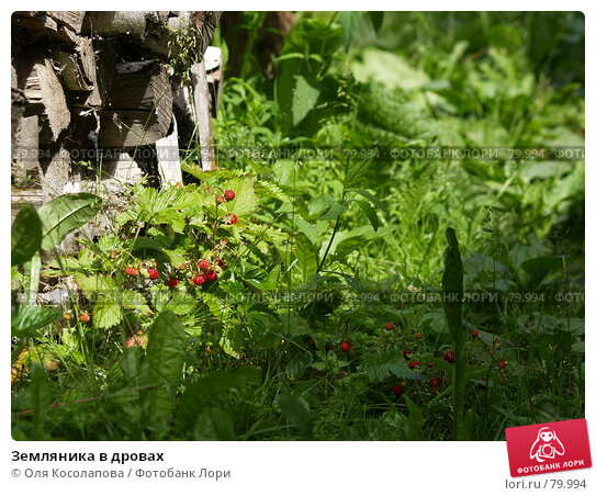 Земляника в дровах, фото № 79994, снято 25 июня 2007 г. (c) Оля Косолапова / Фотобанк Лори