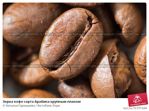 Купить «Зерна кофе сорта Арабика крупным планом», фото № 5777634, снято 5 апреля 2014 г. (c) Наталья Гармашева / Фотобанк Лори