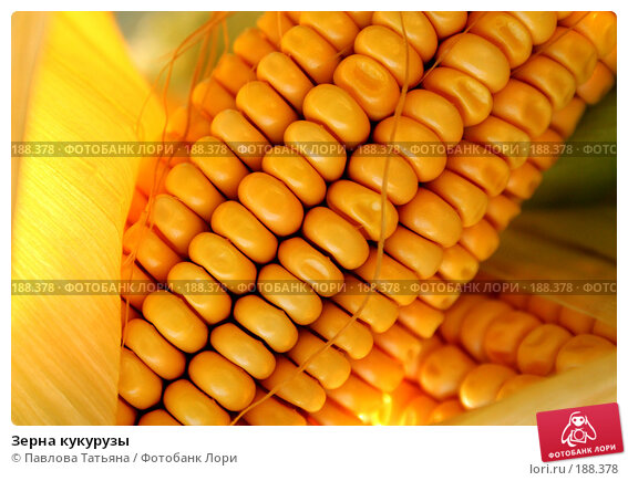 Зерна кукурузы, фото № 188378, снято 25 августа 2007 г. (c) Павлова Татьяна / Фотобанк Лори