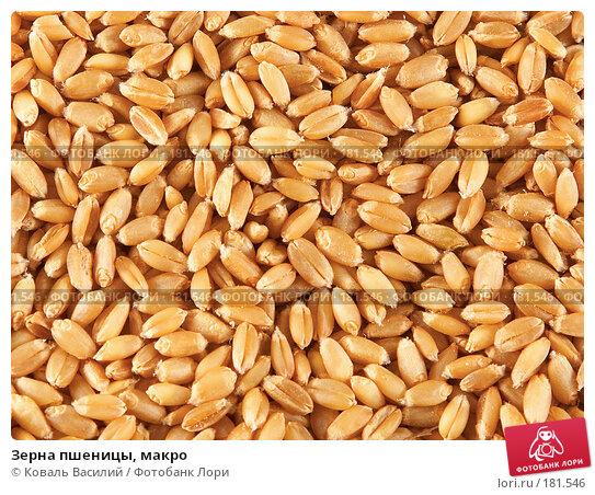 Зерна пшеницы, макро, фото № 181546, снято 18 октября 2006 г. (c) Коваль Василий / Фотобанк Лори