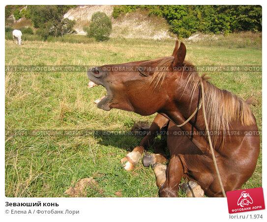 Зеваюший конь, фото № 1974, снято 2 февраля 2003 г. (c) Елена А / Фотобанк Лори