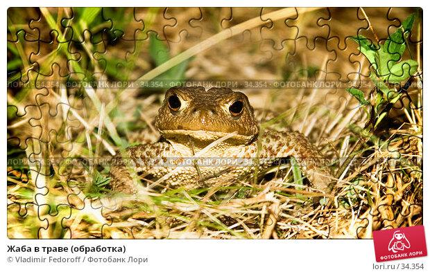 Купить «Жаба в траве (обработка)», фото № 34354, снято 11 июля 2006 г. (c) Vladimir Fedoroff / Фотобанк Лори