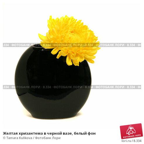 Желтая хризантема в черной вазе, белый фон, фото № 8334, снято 3 сентября 2006 г. (c) Tamara Kulikova / Фотобанк Лори