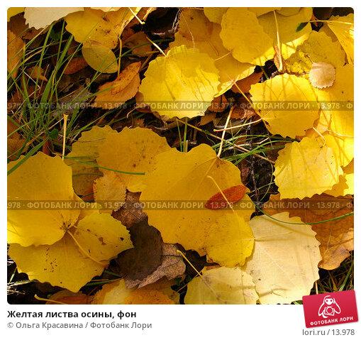 Желтая листва осины, фон, фото № 13978, снято 21 сентября 2006 г. (c) Ольга Красавина / Фотобанк Лори